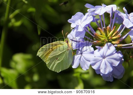 Butterfly On Violet Flower-2