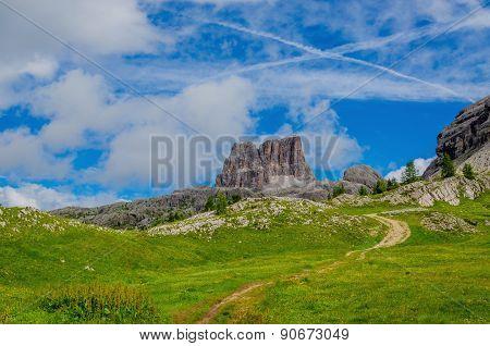 Yellow flowers, Dolomites Mountains, Italy