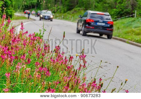 Flower field and car