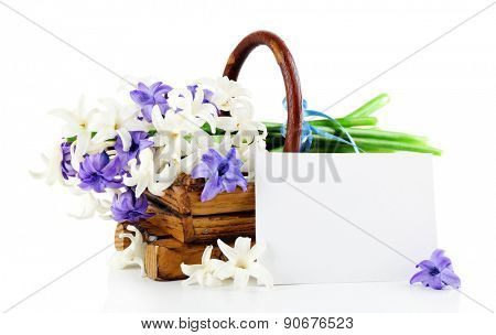 Beautiful hydrangea in wooden basket with card isolated on white