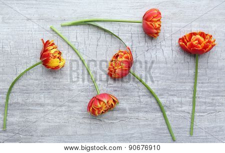 Beautiful bright tulips on wooden background