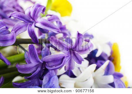 Beautiful bouquet of hydrangea close up