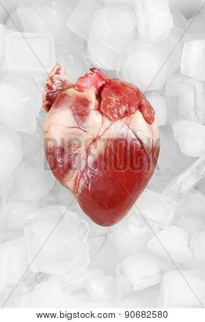 Heart organ with ice close up