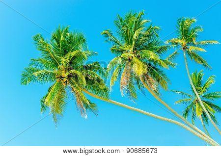 High palm trees against blue sky