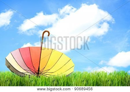 Colorful umbrella on green grass, outdoors