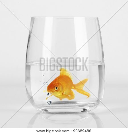 Goldfish in glass, close up