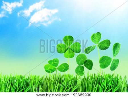 Clover leaves in grass against blue sky background