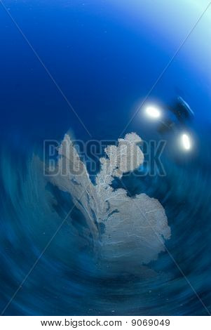 Motion blur shot of a scuba diver