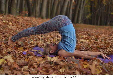 Young Woman Doing Yoga Asanas In Autumn Forest. Halasana