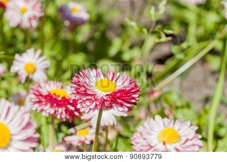 bright pink summer flowers