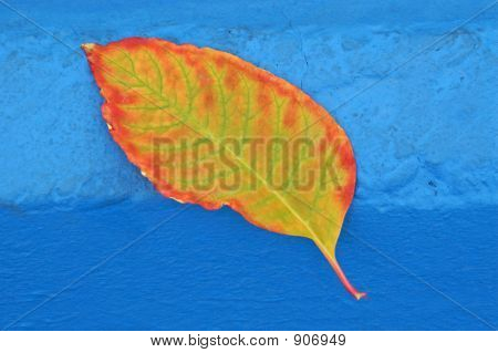 Autumn Leaf On Blue