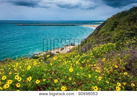 Yellow Flowers And View Of The Pacific Ocean From Inspiration Point In Corona Del Mar, California.