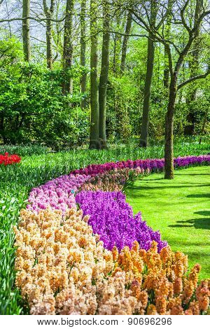 beautiful floral Keukenhof park in Holland