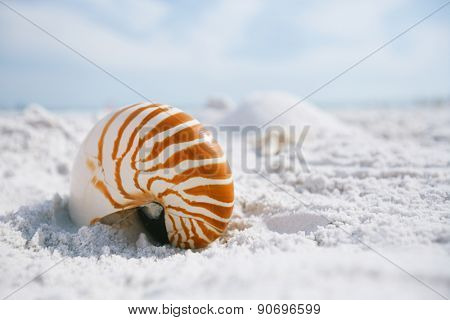 nautilus shell with sea wave,  Florida beach  under the sun light
