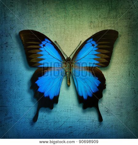 Vintage background with blue butterfly