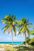 stock photo of caribbean  - Amazing sandy beach with palm trees - JPG