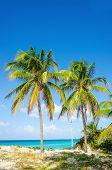 foto of caribbean  - Amazing sandy beach with palm trees - JPG
