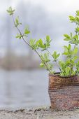 picture of polution  - Fern growing in rusty can lakeside on an overcast day - JPG