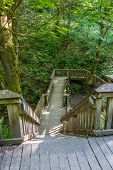 stock photo of dash  - A wooden walking structure gives access to a trail at Dash Point State Park in Washington State - JPG