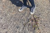 picture of weed  - The feet of a woman standing by some weed growing in the street - JPG