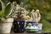 foto of planters  - Cactus plants in various colorful ceramic planters - JPG