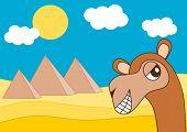 foto of dromedaries  - egypt pyramid and the happy dromedary funny cartoon illustration - JPG
