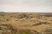 pic of dune grass  - Dune landscape in Skagen Denmark with beech grass - JPG