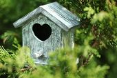 image of nesting box  - Decorative nesting box on branch - JPG