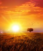 stock photo of grass bird  - Intense sun setting down on a peaceful grass field with a flight of birds - JPG