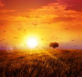 pic of grass bird  - Intense sun setting down on a peaceful grass field with a flight of birds - JPG