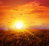 foto of grass bird  - Intense sun setting down on a peaceful grass field with a flight of birds - JPG