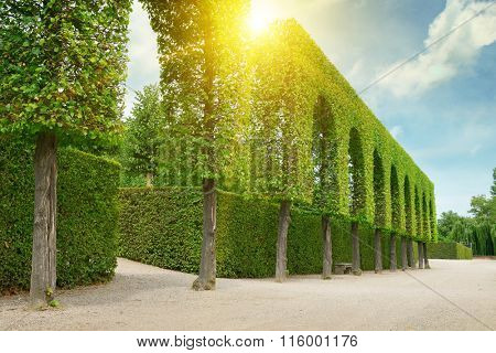 Decorative hedges in the park