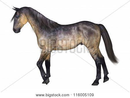 Grulla Horse On White
