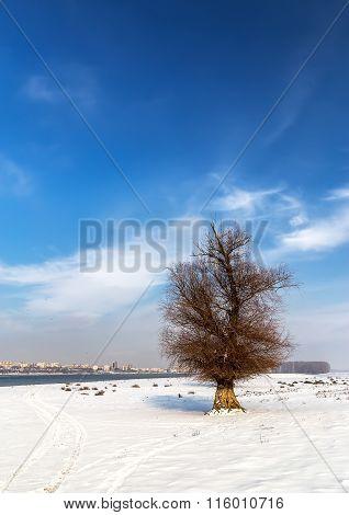 Single Tree In Snow Near The Danube