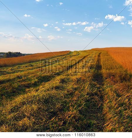 Autumn Rural Landscape