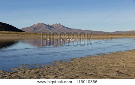 Flamingos In The Lagoon Huayñacota In The Natural Park Of Sajama. Bolivia