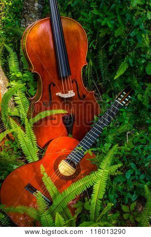 Cello and guitar in tall green ferns, outdoors