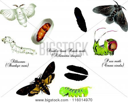Amazing insect world - moths