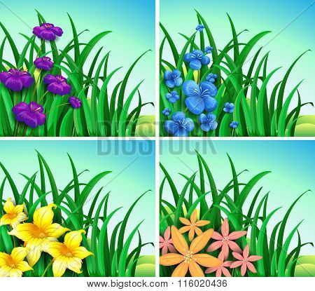 Four scenes of flowers and grass illustration