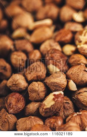 Plenty Of Ripe Hazelnuts, Macro Shot