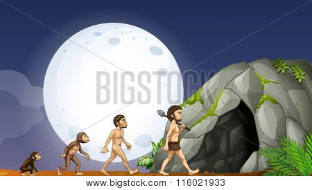 Apes and human development illustration