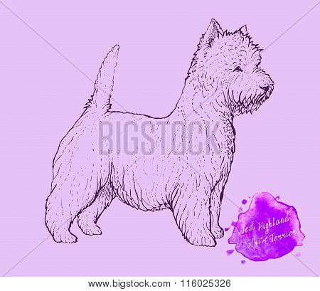 dog on a pink background