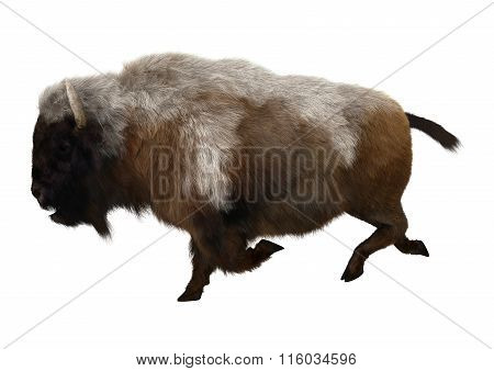 American Bison On White
