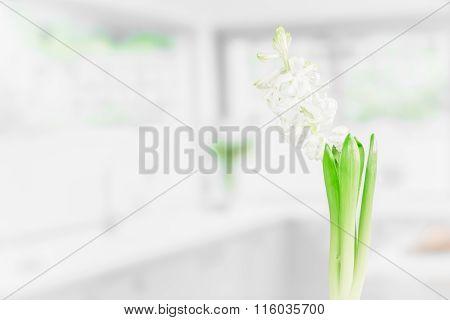 Indoor Flower In A Kitchen
