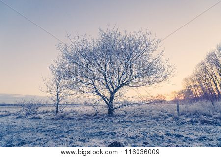 Tree In The Winter Frost