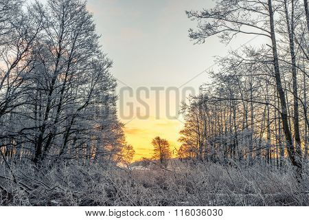 Sunrise In A Forest On A Cold Morning