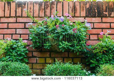 Gardening Flowers In Pots