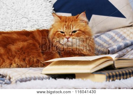 Red cat with book on sofa inside