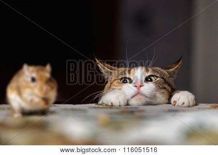 Cat playing with little gerbil mouse on thetable