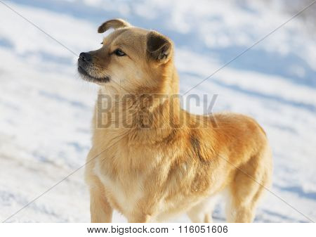 Portrait Of A Mongrel Dog In Winter